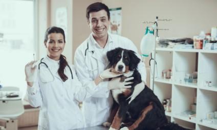 Auxiliar de veterinário e pet shop