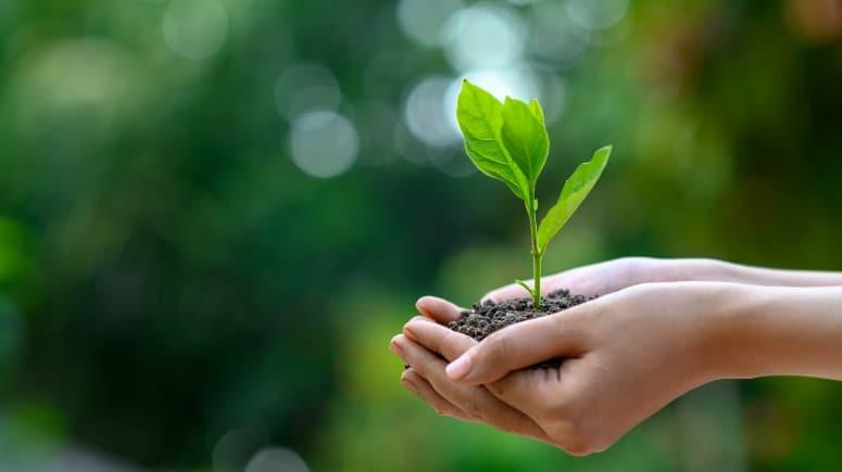 Meio ambiente: como está seu compromisso com ele?